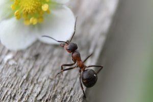 Mieren kunnen erg hinderlijk zijn