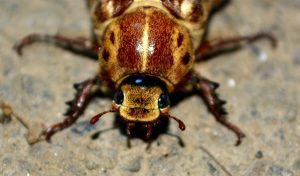 kakkerlak-2